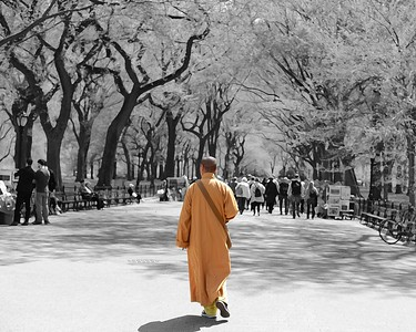 Monk in Central Park