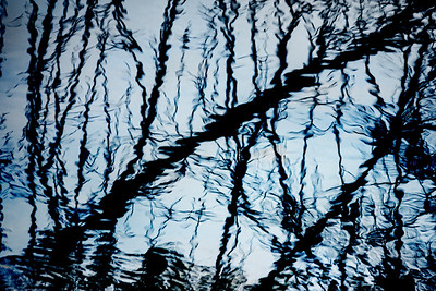 The Woods Reflected
