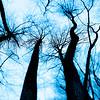 Neuronic Trees