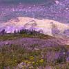 Mount Rainer Abstract