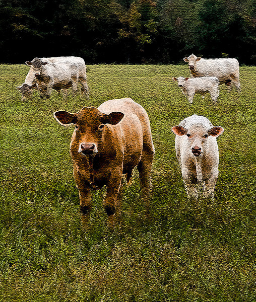 Painted Cattle