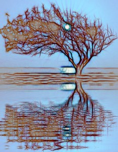 Eagle Point Tree