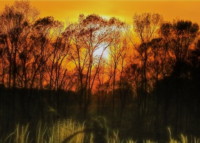 Sun Lighting Up Trees