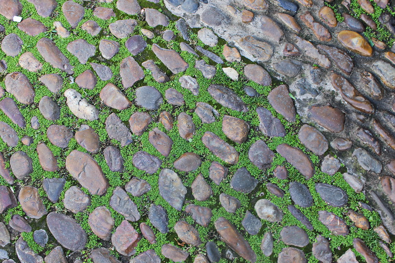 Moss on a Cobblestone Road