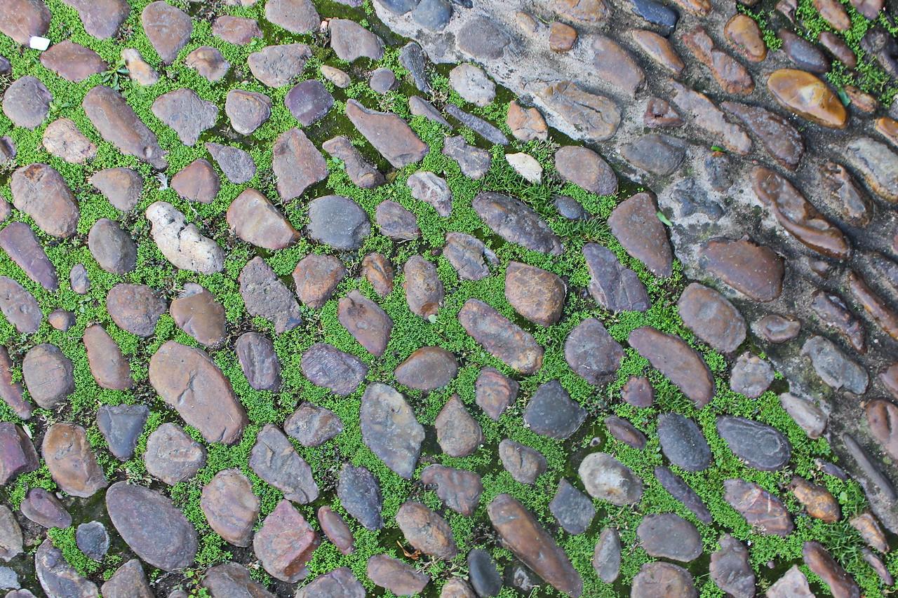 Moss on a Cobblestone road