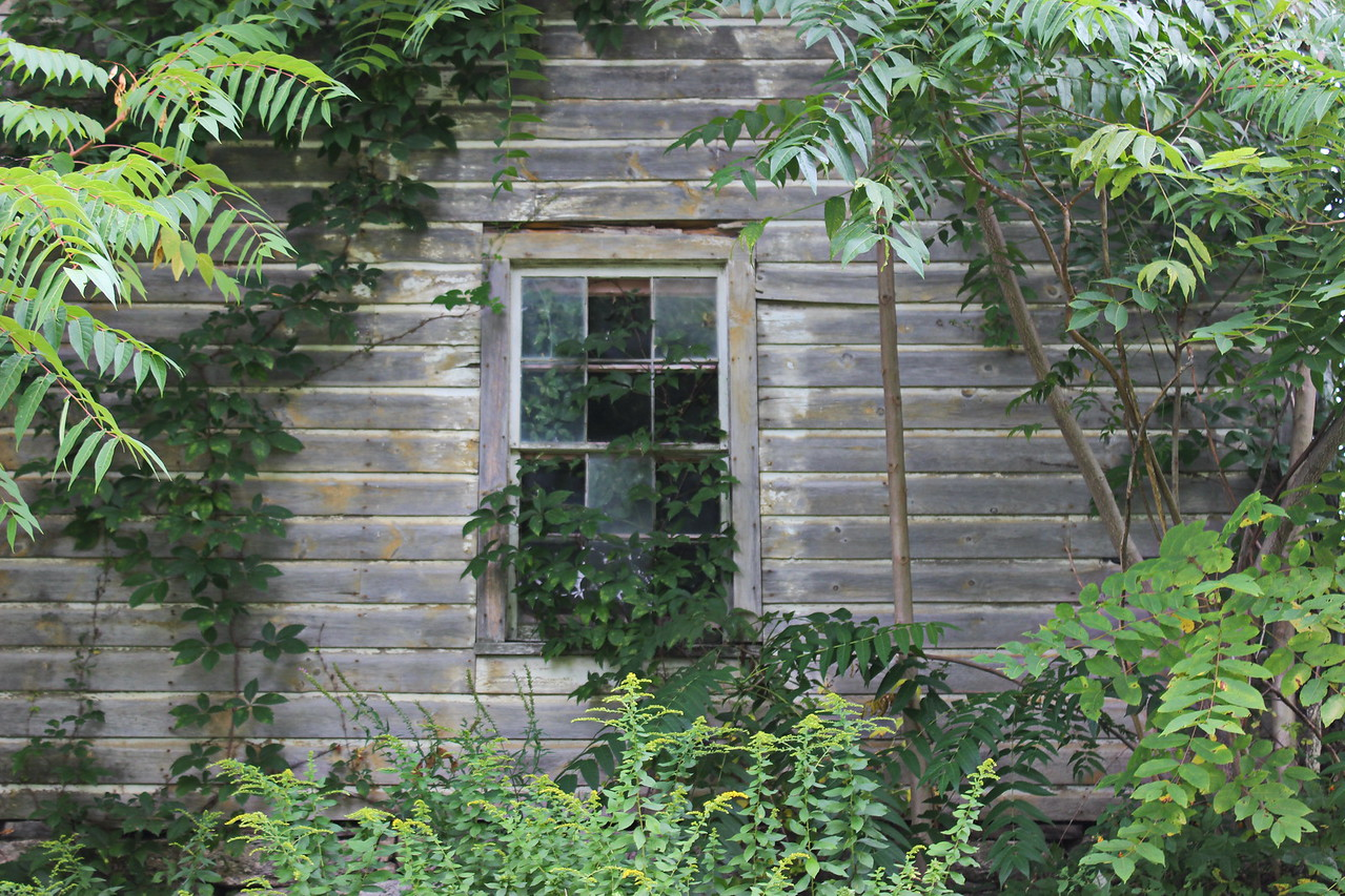 Overgrown Barn Window