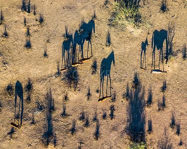 Wild Horse Shadows