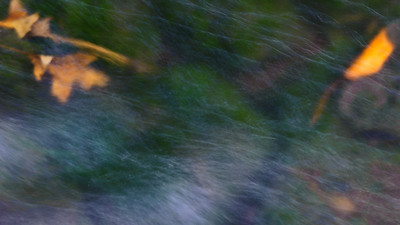 leaves beneath the stream  long exposure abstract photograph of leaves on the bottom of a stream