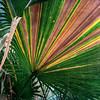 Palm Fan