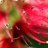 Abstract Macro Bloom