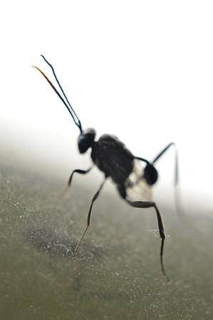 Bugs Life No. 1
