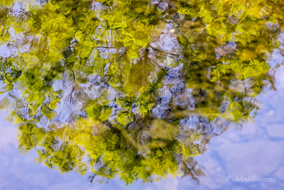 Tree Reflected in Stream