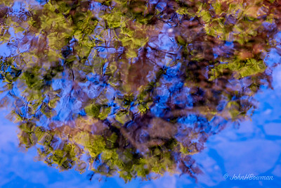 Tree Reflected in Stream - Colors Altered