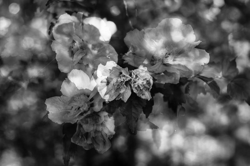 Flowers in 5
