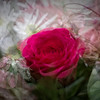 Valentine's Flowers (Wife)