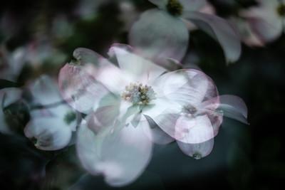 In Bloom in color