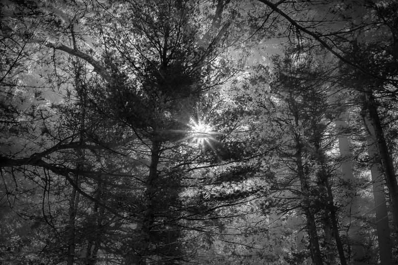 Treetop in three