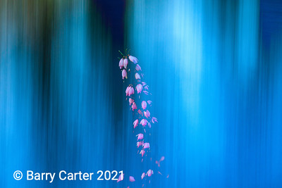 Plant ICM in Blue