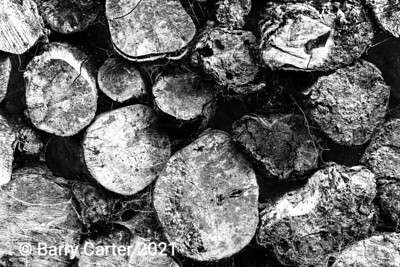 Log Pile in High Contrast