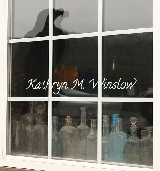 bottles and eagle reflection Thorne Bay – Version 2