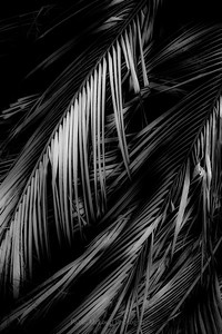 Frondness