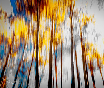 Displaying Nature In The Abstract