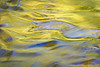 abstract waterscape photograph made at Turkey Creek Nature Preserve