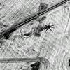 Aerial Abstract of Prairie Farmland, over Alberta