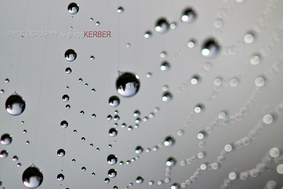 Dew drop reflections