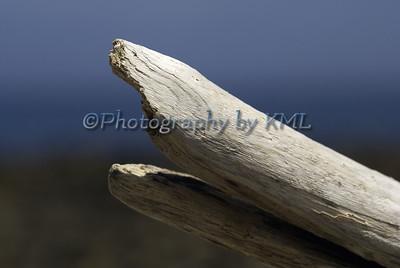Sharky Driftwood
