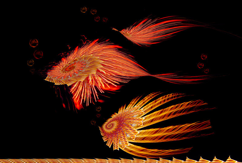 Flambuoyant Fish