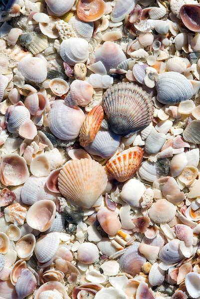 shells_1406