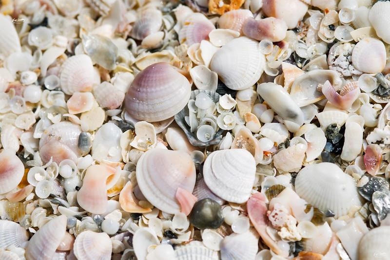 shells_1344