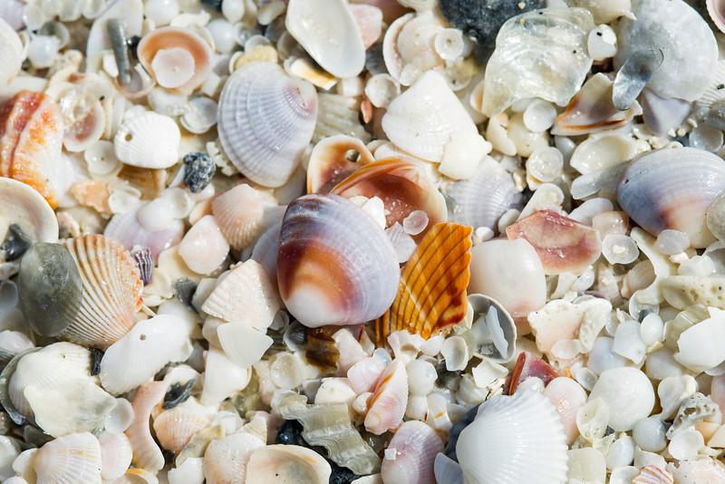 shells_1297