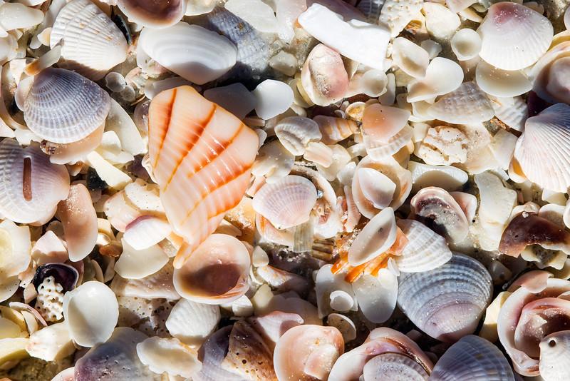 shells_1415