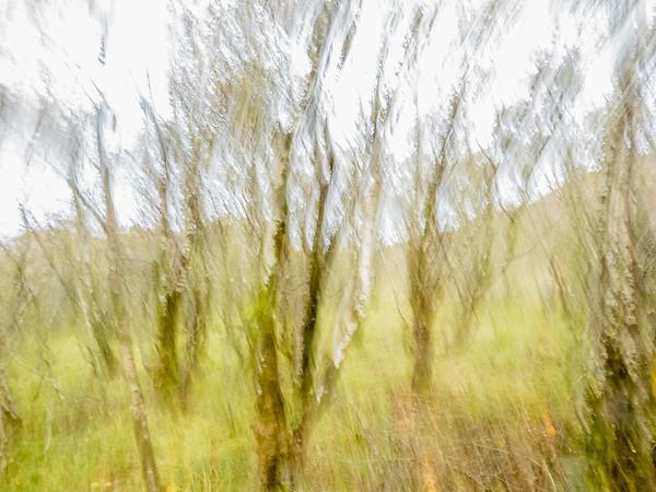 Kinloch Forest