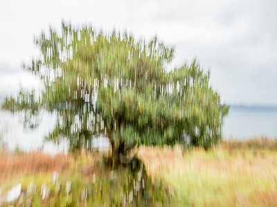 Holly Tree, Leitir Fura