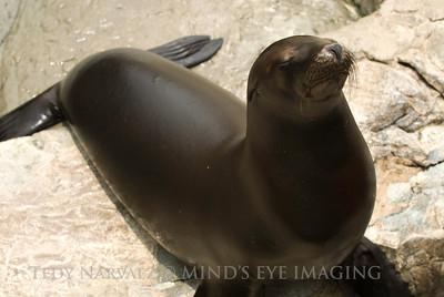 SeaWorld1097