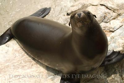 SeaWorld1096