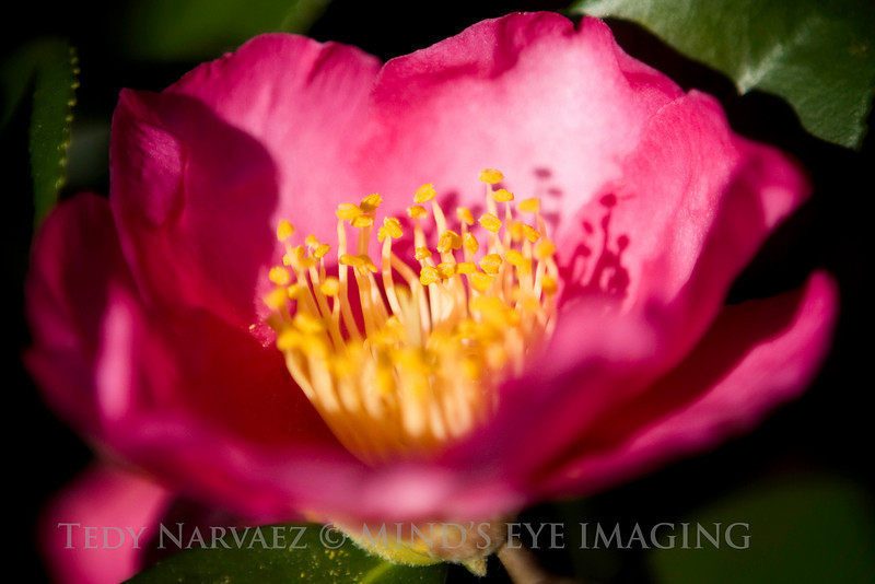 Picnic|Flower012