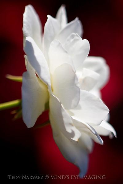 Picnic|Flower014