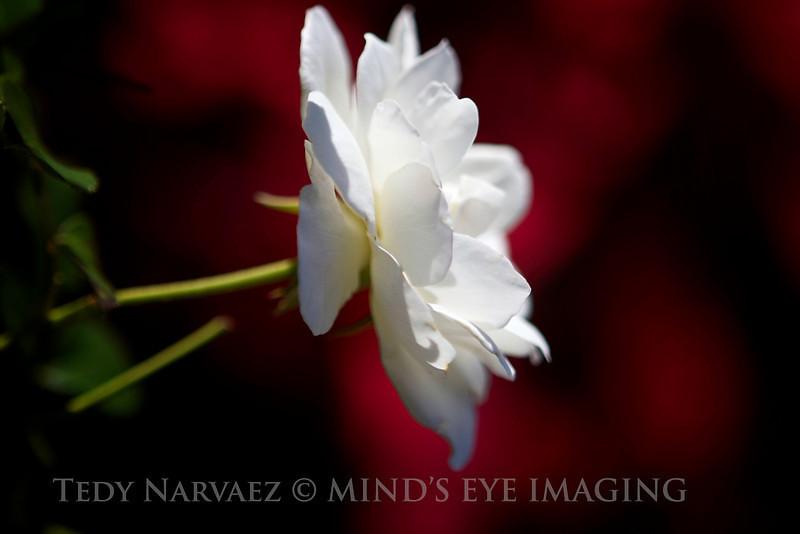 Picnic|Flower013