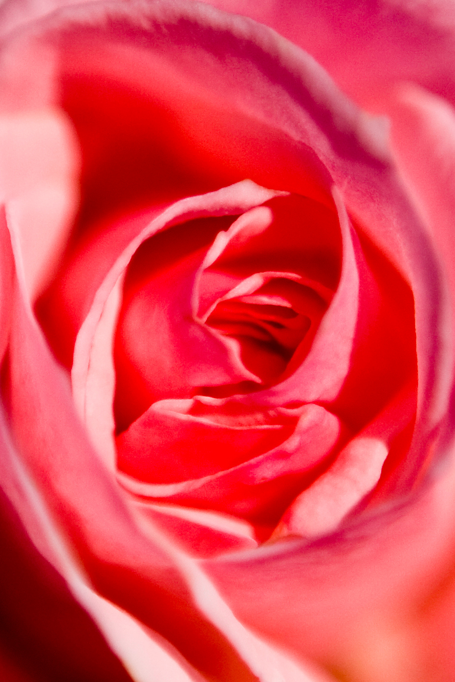 Picnic|Flower024