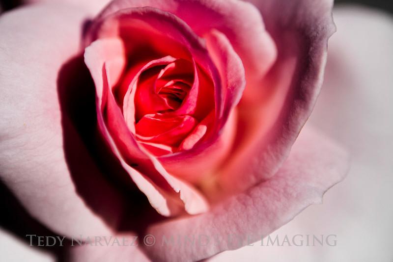 Picnic|Flower021