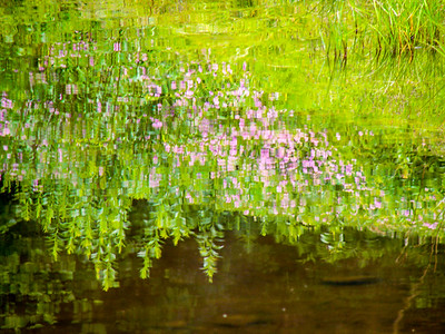 painterly reflection 15