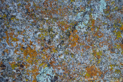Lichen abstract - Nr. Mobius Arch - Lone Pine, CA, USA