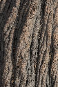 Lava Patterns - Punta Espinosa, Isla Fernandina, Galapagos, Ecuador