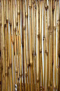 bamboo-barrier