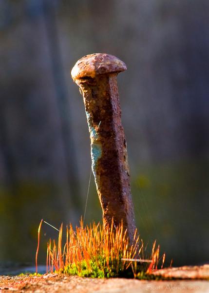 Old nail, Cook Inlet flotsam, Alaska.