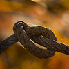 Rusty Cable in a knot along the shore of Cook Inlet, Anchorage, Alaska.